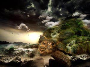 turtle-564733_1280